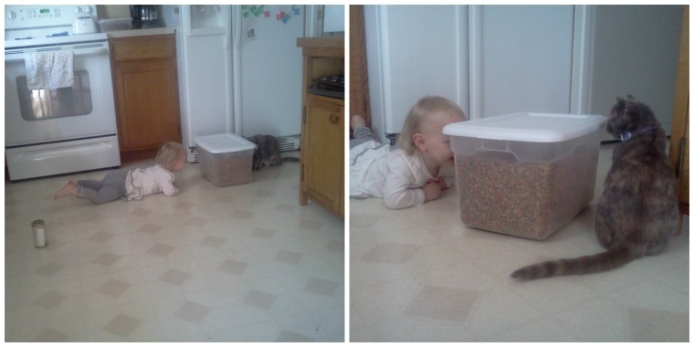 Oh, the shrieks Maddy exclaimed when she realized she could play peek-a-boo through the cat's food container!